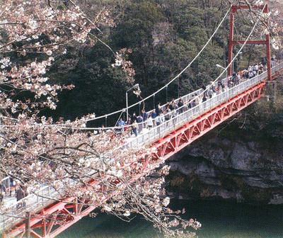 Sakurabuti