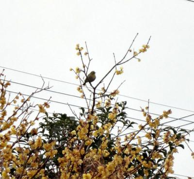 Mejiro_3