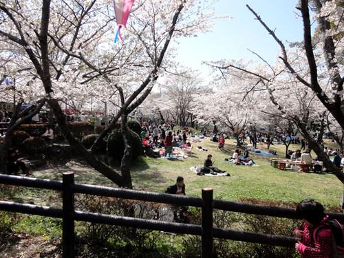 Sakurabuti_10_4
