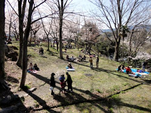 Sakurabuti_12_2