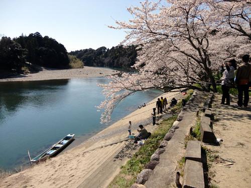 Sakurabuti_14
