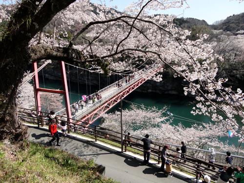 Sakurabuti_2