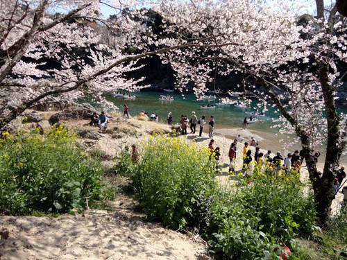 Sakurabuti_3