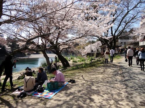 Sakurabuti_4_3