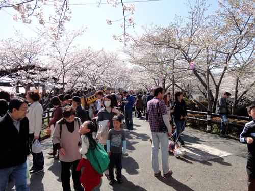 Sakurabuti_6