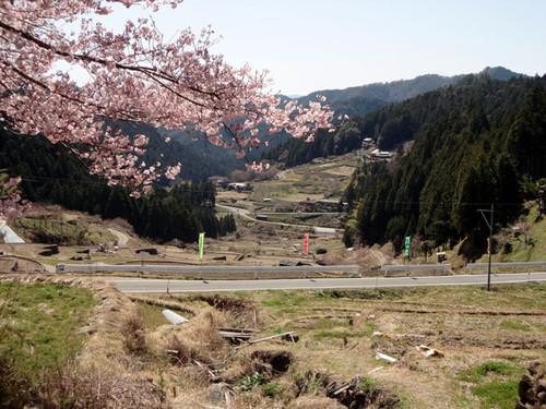 Sakura_tanada