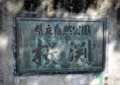 Sakurabuti_8